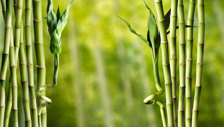 El helecho y el bambú: una fábula que nos ayuda a comprender la resiliencia